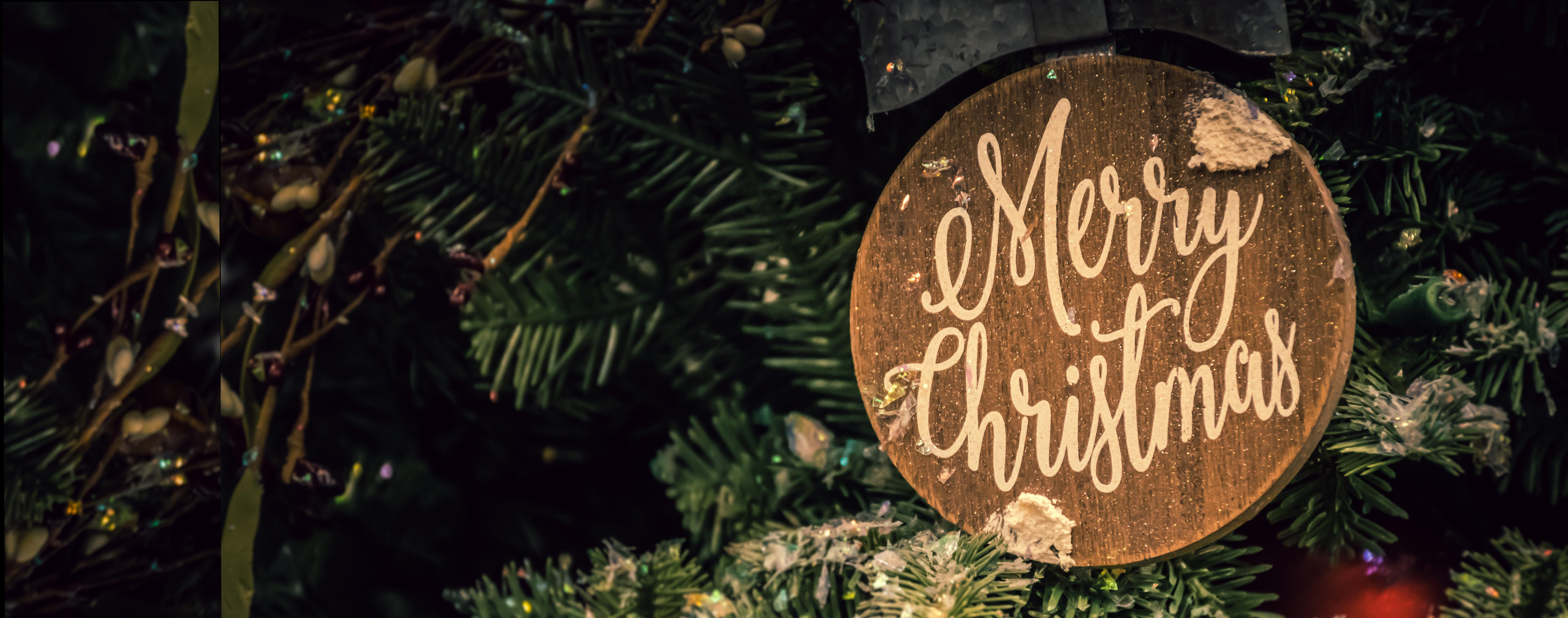 branch-celebration-christmas-1656564