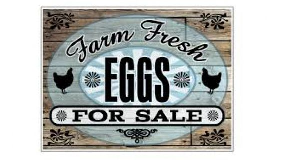Farm fresh local eggs