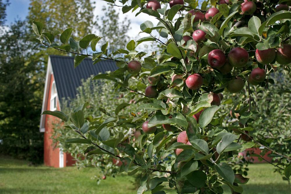 Apples & Farm